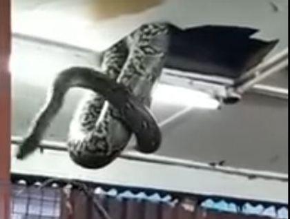 A cobra caiu sobre a mesa dos clientes